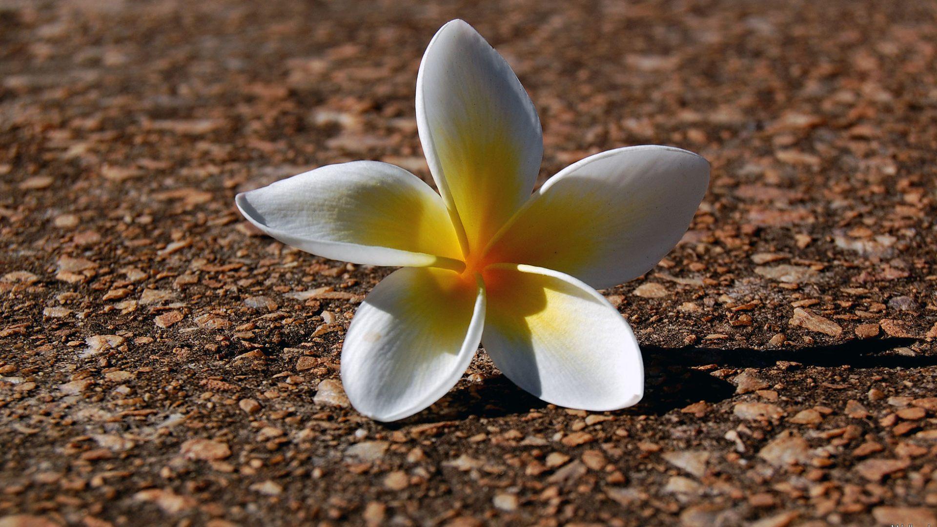 Твой цветок.