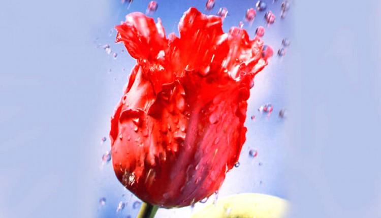 Твой цветок.1